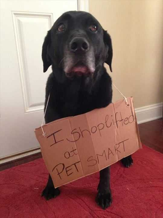 dog shaming - shop lifter dog