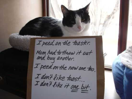 cat shaming - peed on toaster
