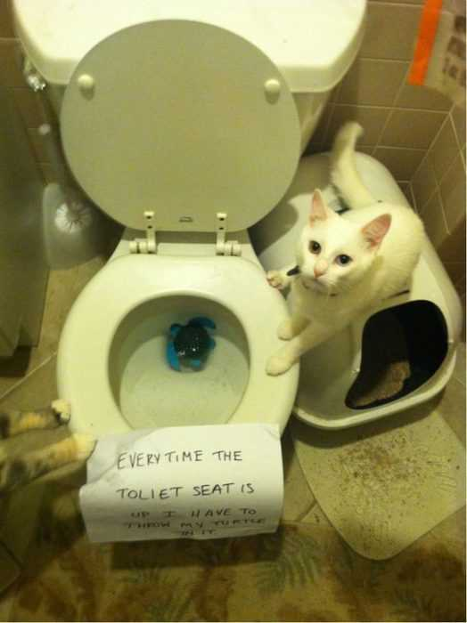 cat shaming pics - throws favorite toy in toilet