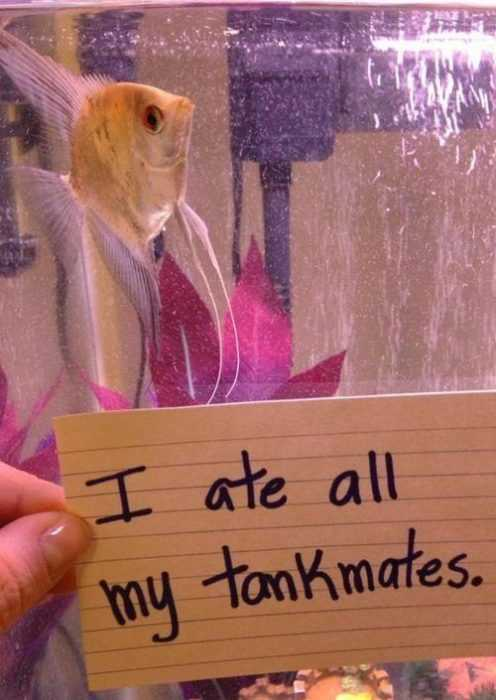 fish shaming - cannibal