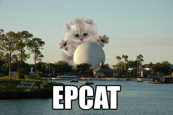 disney memes funny - epcat