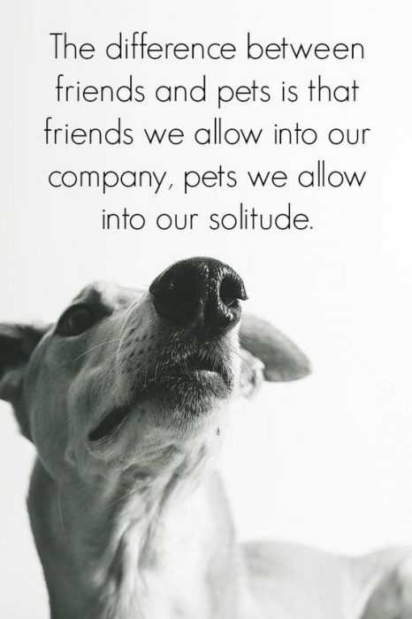 Pets Lover Quotes - Pets And Friends