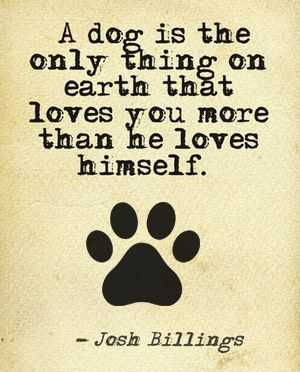 Dog Lovers Quotes - Dog's Love