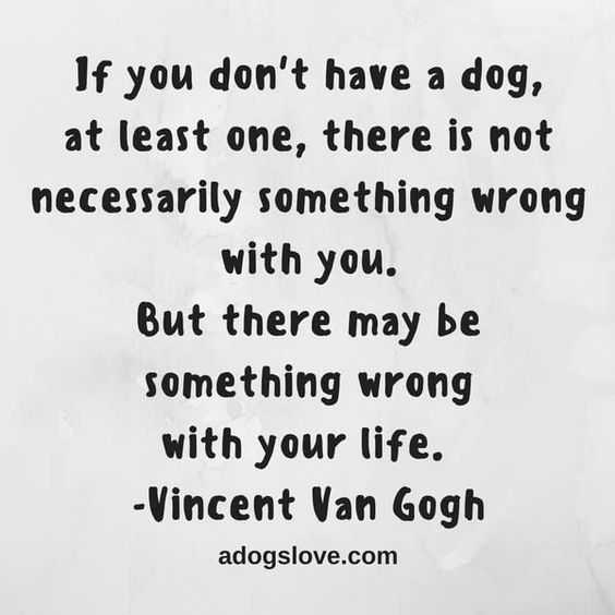 Dog Lover Quotes - Dogs