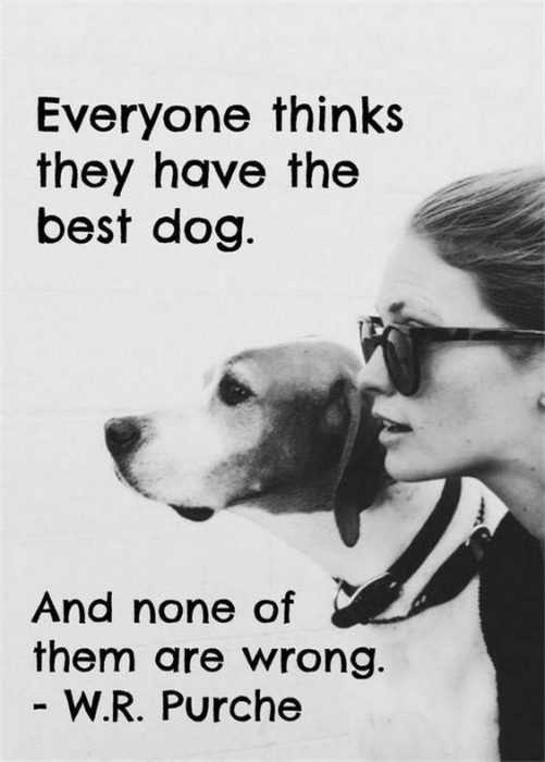 Animal Lover Quotes - Best Dog