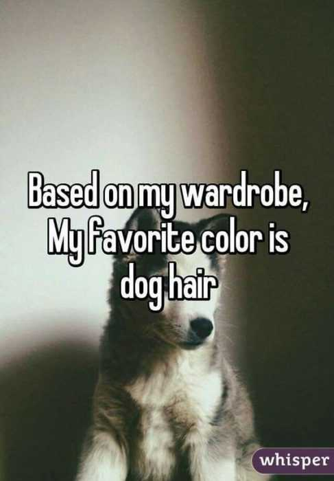Animal Lover Quotes - Dog Hair