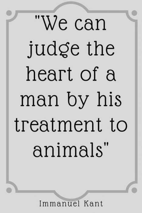 Animal Lover Quotes - Judging Man's Heart
