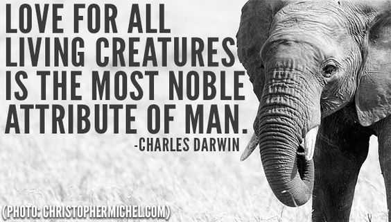 Animal Lover Quotes - Creature Love