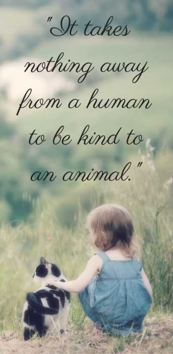 Animal Lovers Quotes - Kindness To Animals