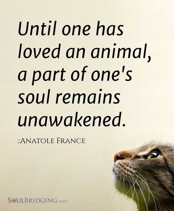 Animal Lover Quotes - Waking The Soul