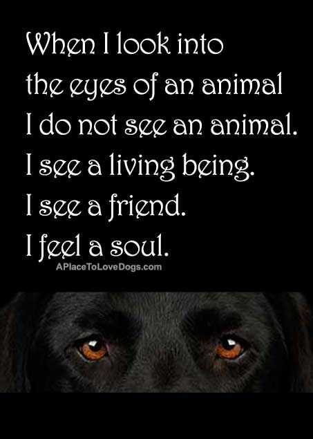 Animal Lover Quotes - Eyes Of An Animal