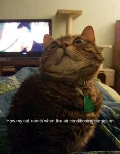 30 Funny Animal Pictures - Cool Cat