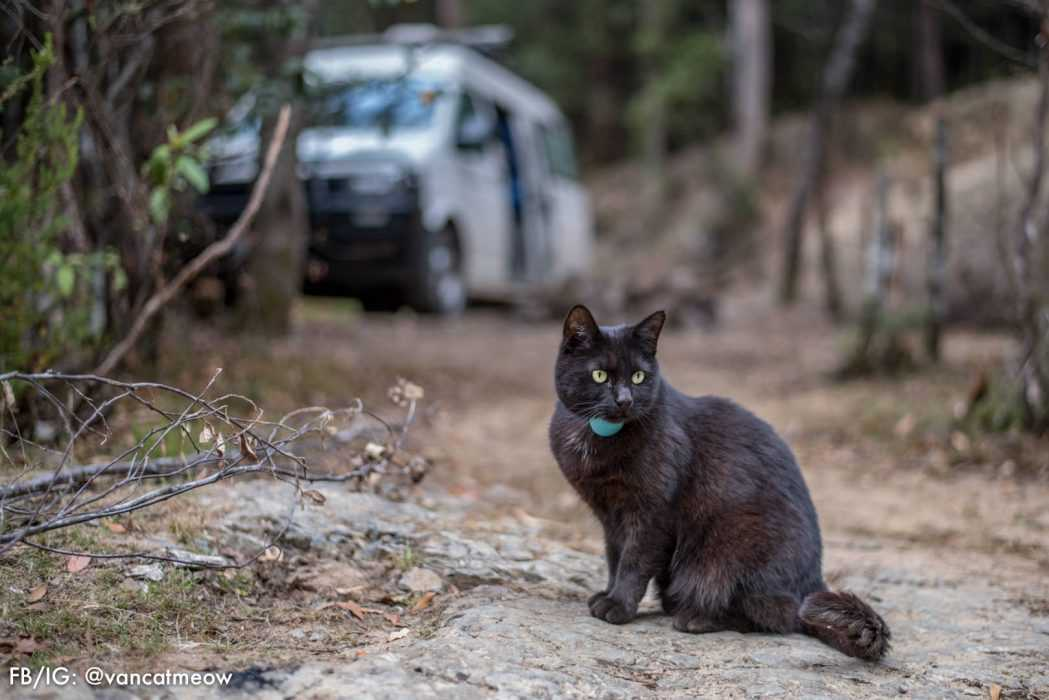 Photogenic Cats - roam the great outdoors