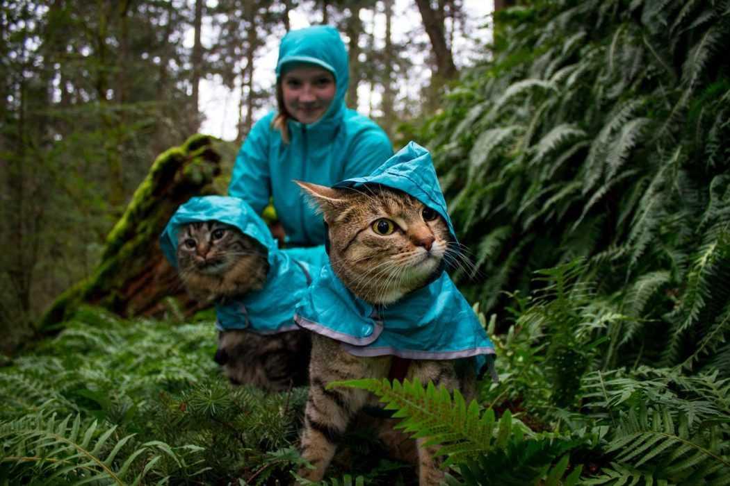 Photogenic Cats - rainforest explorers