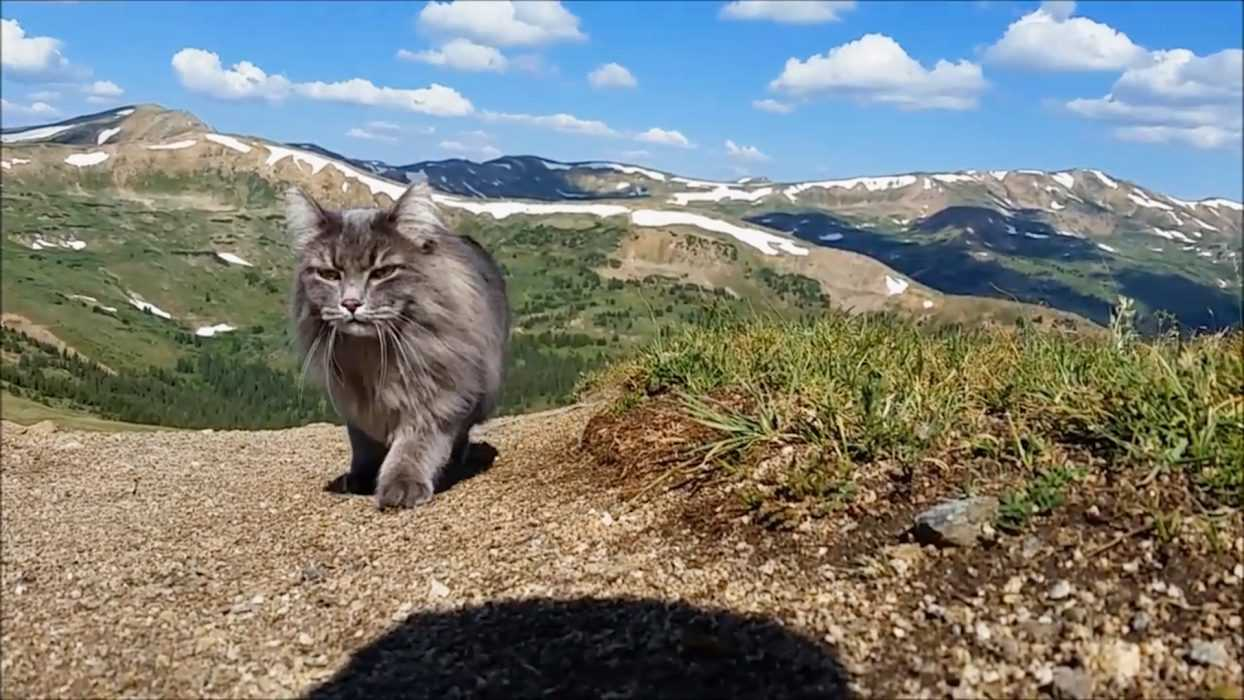 Photogenic Cats - exploring the high plateaus