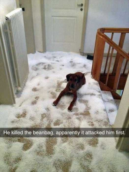 30 Funny Animal Memes Pictures - Beanbag Accident