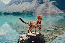 Photogenic Cats - alpine lake explorer