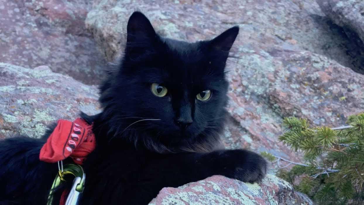 Photogenic Cats - rock climbing cat