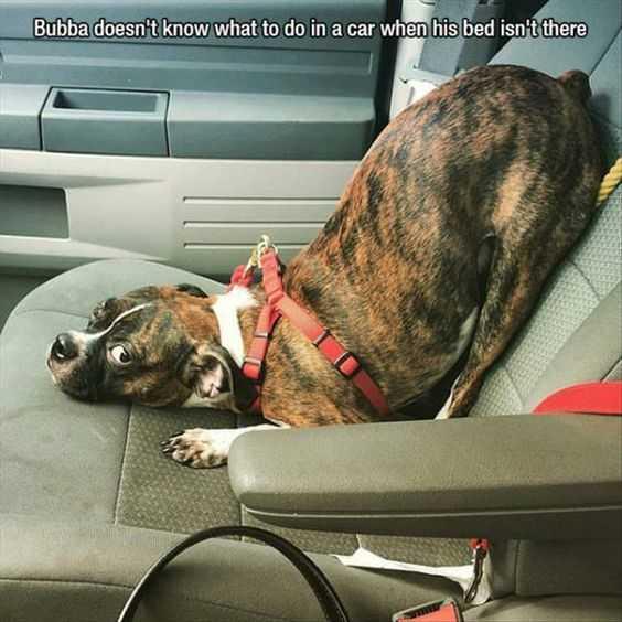 30 Funny Meme Animal Pictures - Downward Facing Dog