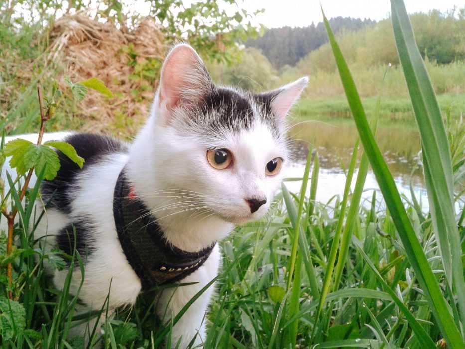 Photogenic Cats - swamp explorer