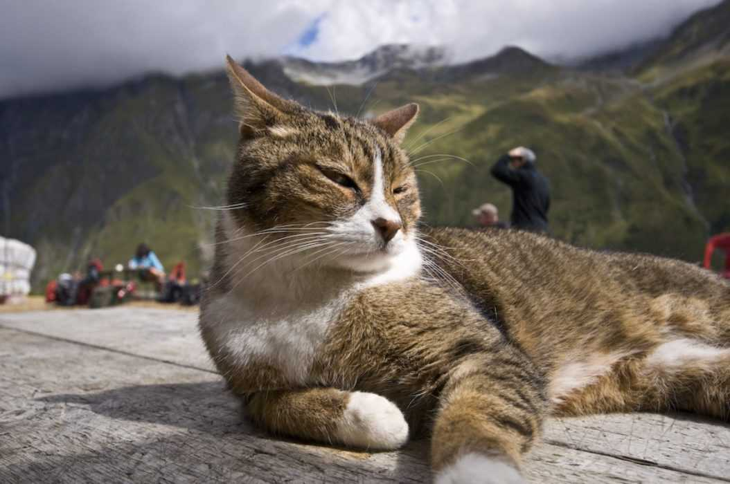 Photogenic Cat - in the fields