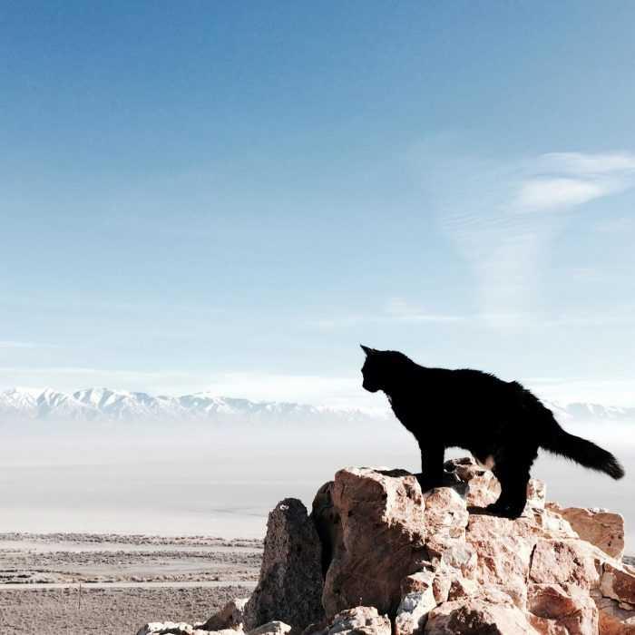Photogenic Cats - high altitude desserts