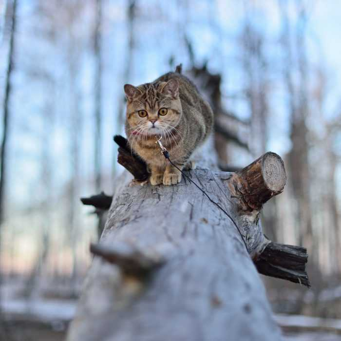 Photogenic Cats - forest cat