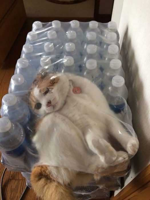 Dog Water Bottle >> 30 Funny Animal Pictures and Memes You Won't Stop Laughing At