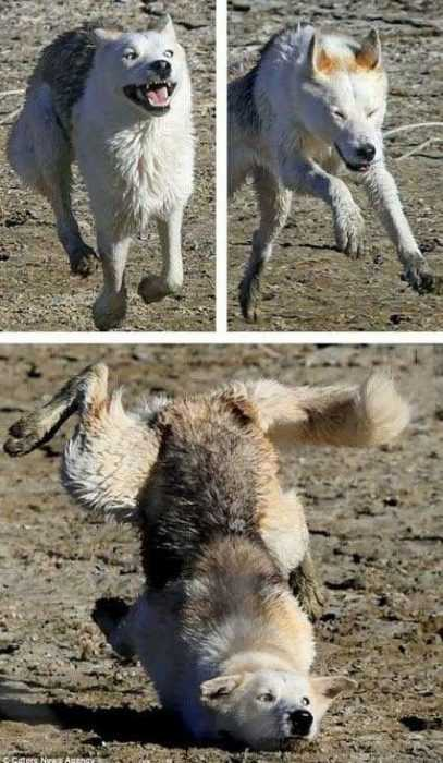 30 Funny Memes And Animal Pictures - Face Plant