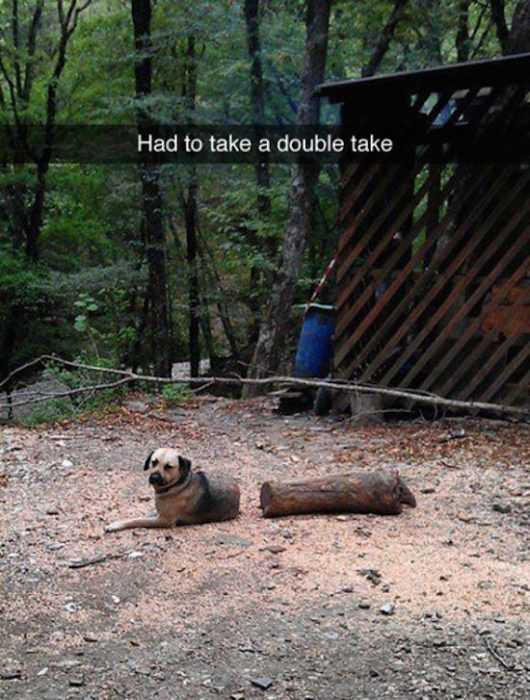 30 Funny Animal Pictures And Memes - Copperfield Dog