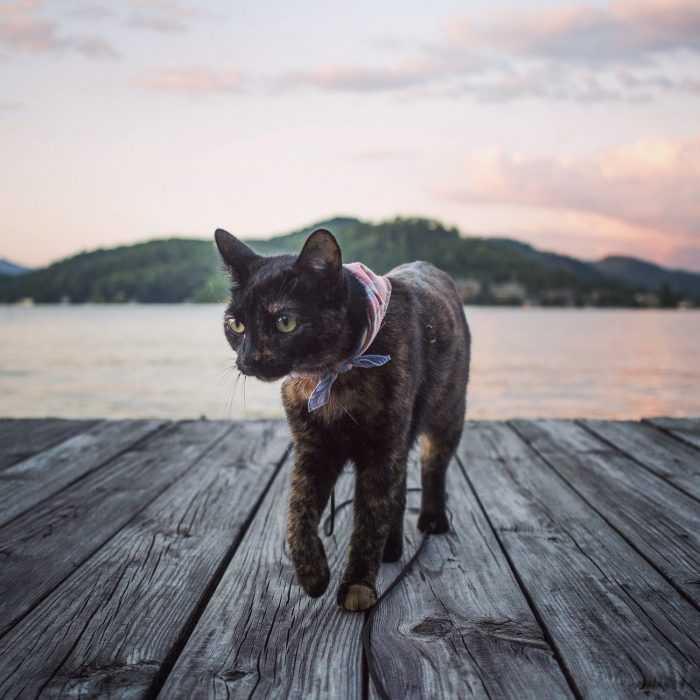Photogenic Cats - lakefront cat