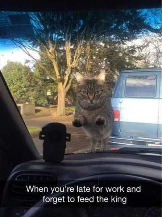 30 Funny Animal Pictures And Memes - Hangry Cat