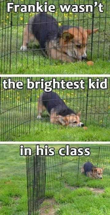 30 Funny Animal Memes And Pictures - Fenced Out Dog