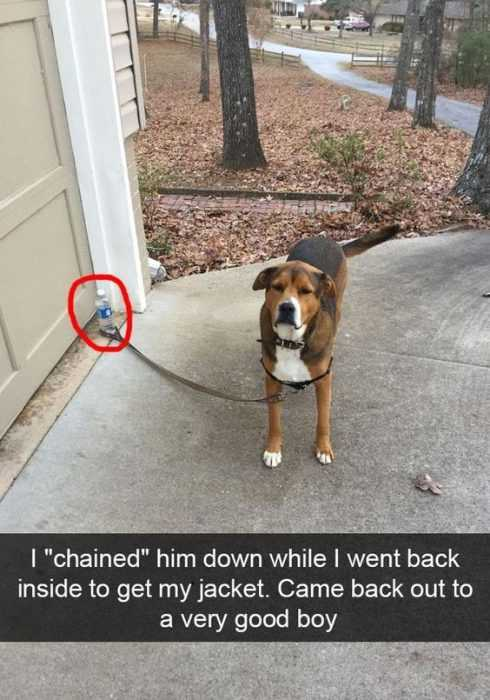30 Funny Animal Picture Memes - Very Good Boy