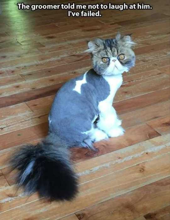 30 Funny Animal Memes Pictures - Bad Hair Day