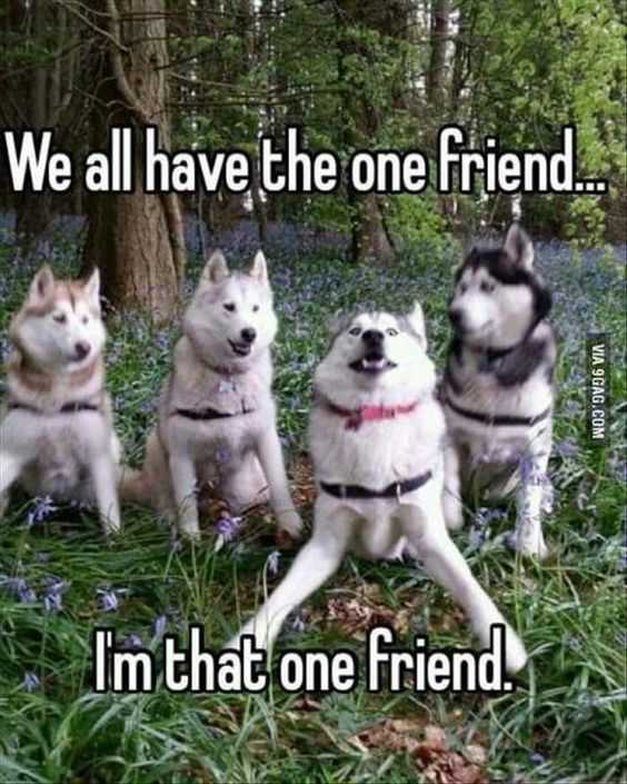 30 Funny Animal Memes Pictures - Ruin That Photo