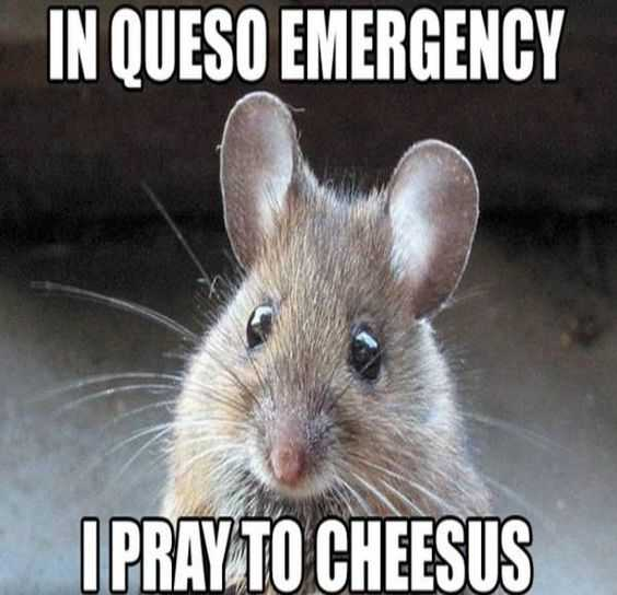 30 Funny Memes And Animal Pictures - Cheesy Joke