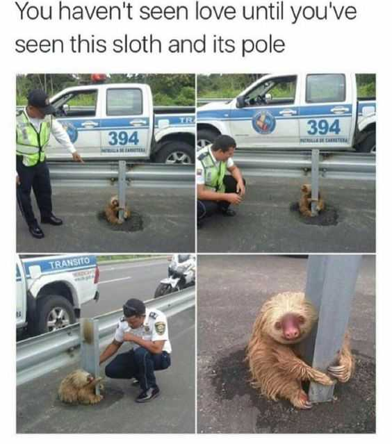 30 Funny Animal Memes Pictures - Pole Love