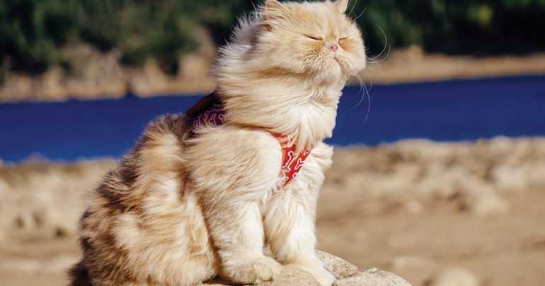 Photogenic Cats - facing the wind