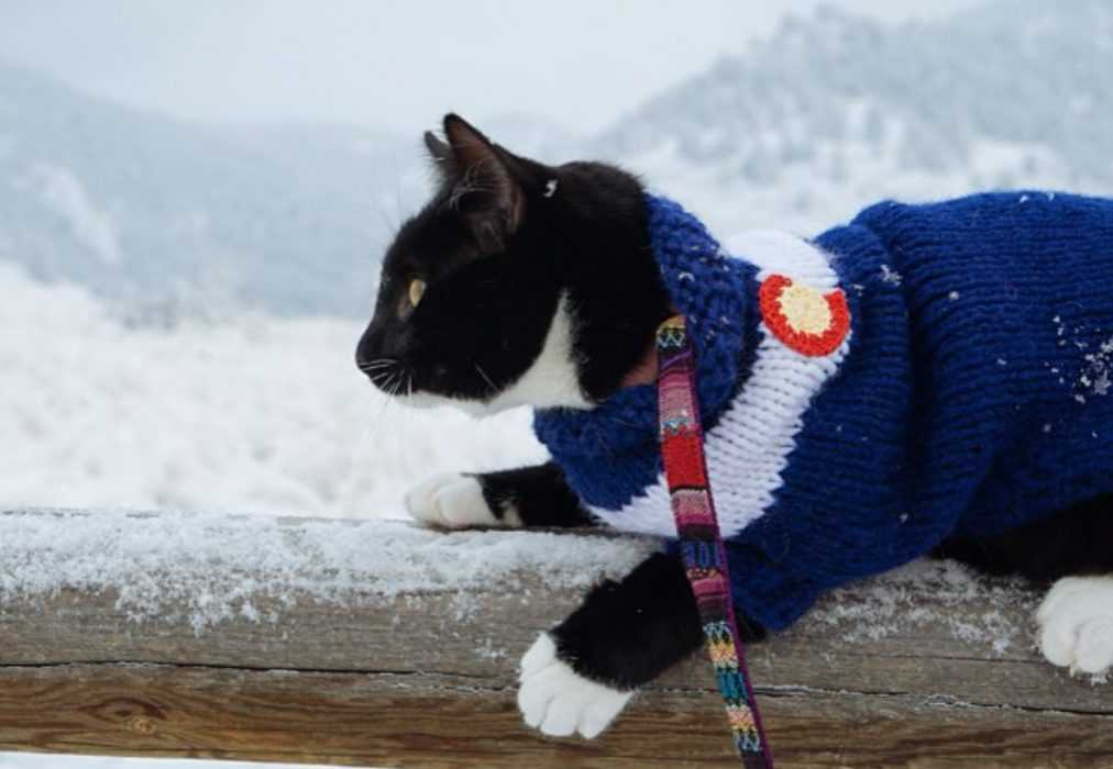 Photogenic Cats - exploring the great outdoors