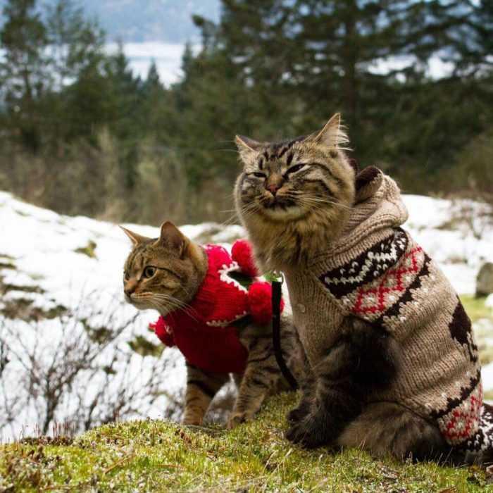 Photogenic Cats - snow.