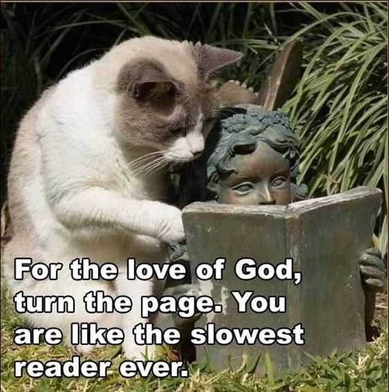 30 Funny Animal Picture Memes - Cat Trying To Read