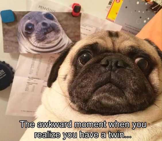 30 Funny Animal Memes - Separated At Birth