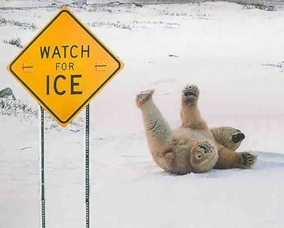 30 Funny Animal Memes And  Pictures - Polar Bear On Icy Road