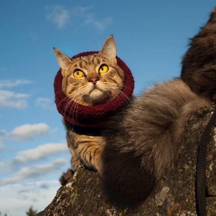 Photogenic Cats - exploring winter