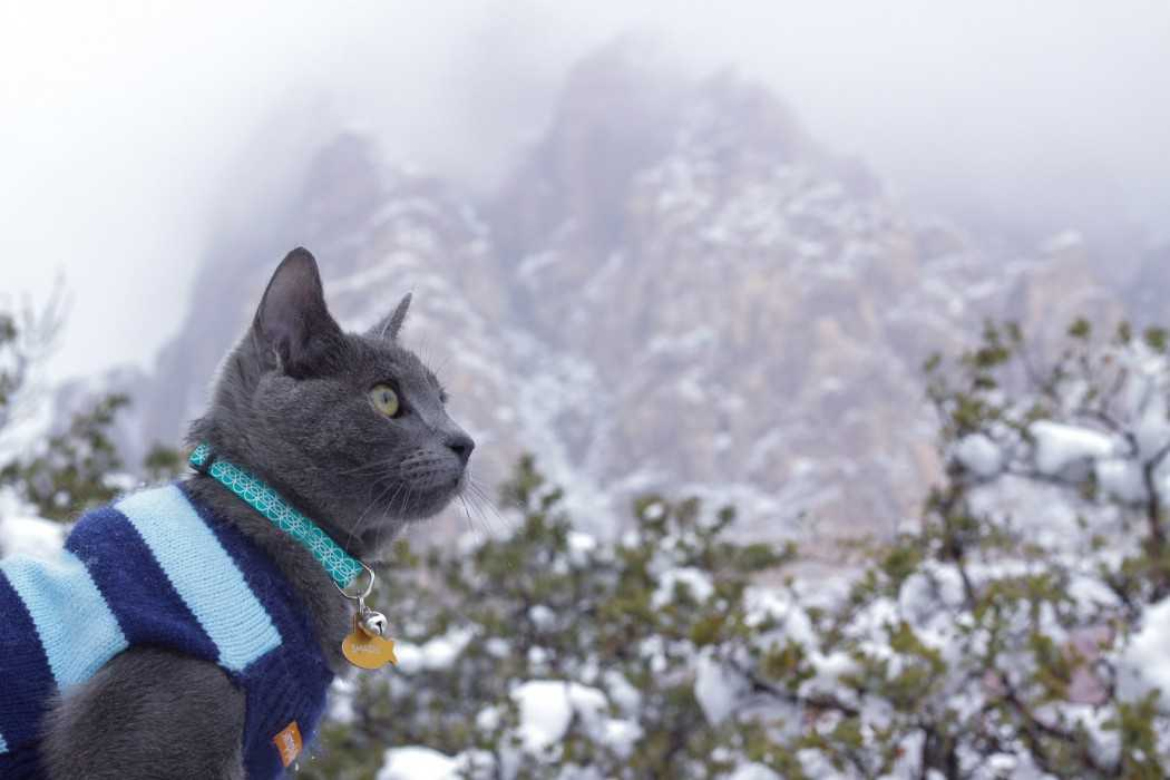 Photogenic Cats - in the mountains