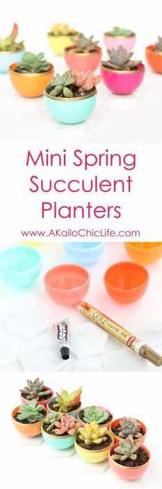 DIY Spring Project - succulent planter