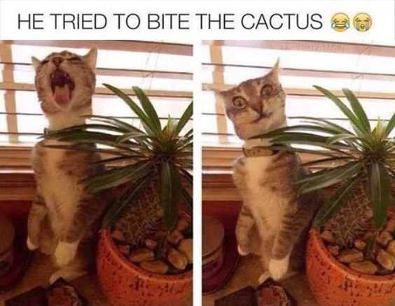 24 Hilarious Animal Pictures with Captions - cat vs cactus