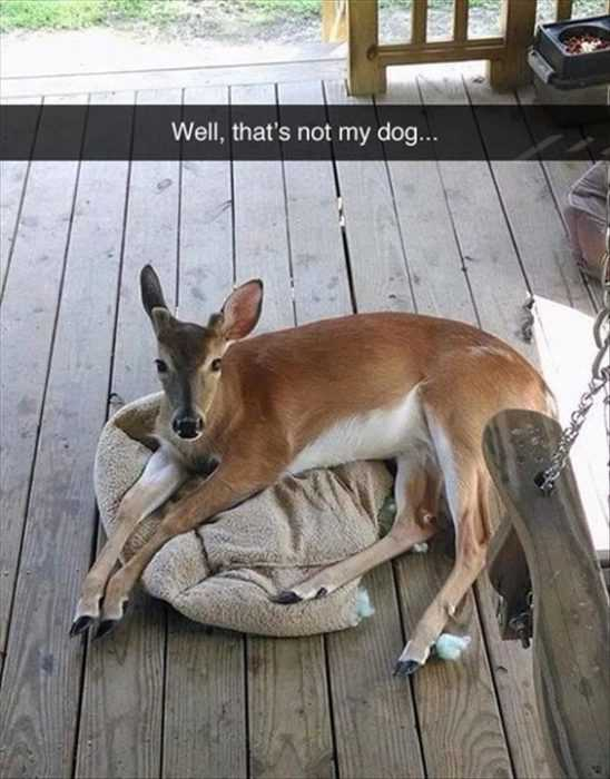 24 Hilarious Animal Pictures with Captions - oh dear