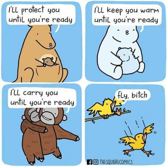 Hilarious Funny Pictures - Birds Are Cruel